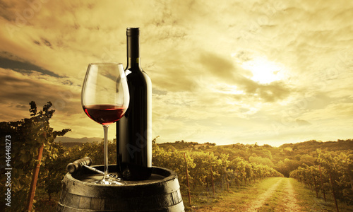 Vineyard at sunset - 46448273
