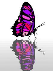 farfalla a primavera