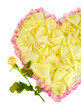Fragment of heart of white rose petals surrounded by pink
