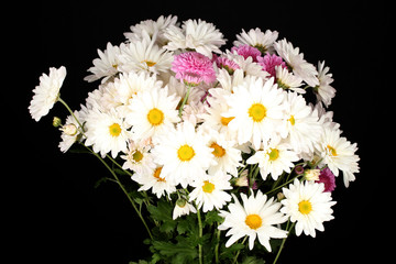 bouquet of daisies isolated on black