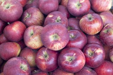 Many fresh ripe organic apples