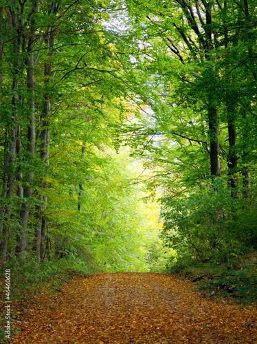 Fototapeten,ökologie,umwelt,umweltschutz,wald