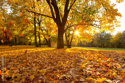 canvas print picture herbsttag