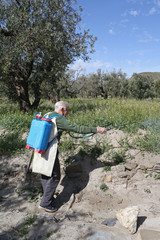 Elderly farmer spraying weed pesticide