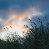 Fototapety Winter an der Nordsee, Juist, Dünen im Abendlicht