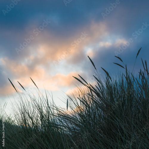 Fototapeten,sanddünen,north sea,winter,abenddämmerung