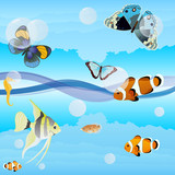 Butterflies and saltwater fish poster
