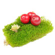 Cranberries on Clump of Green Moss Isolated on White Background