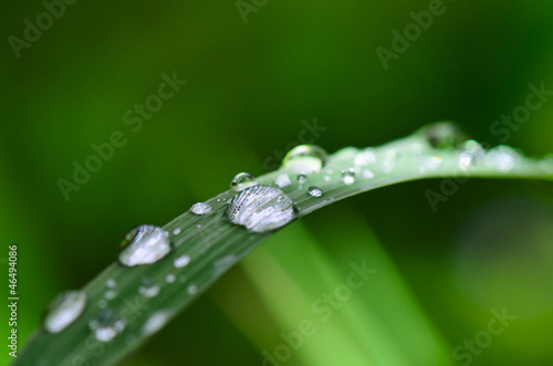 Water droplets on grass in the morning