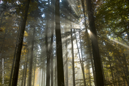 Tyndall effect in forest near Zurich 46498261