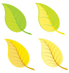 Colorful leaves illustration