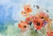 aquarell, mohnblumen mit kapseln