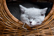 cute Kitten sleeping in a Basket