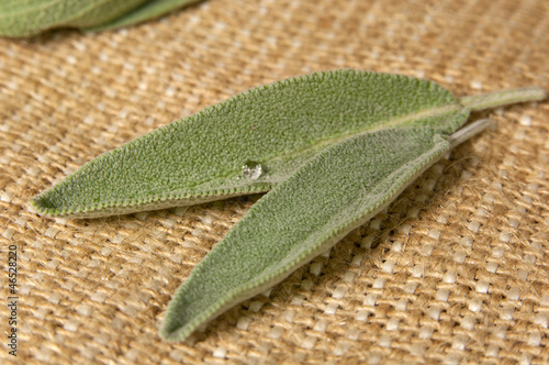 Salvi (sage) leaves on sacking