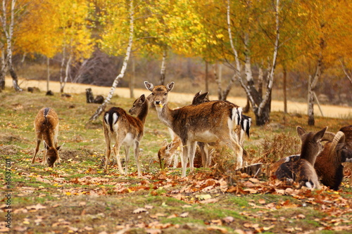 deer eating a leaf