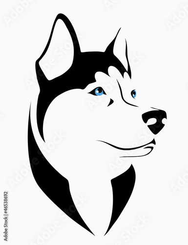 Husky dog - vector illustration
