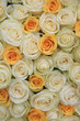 white and yellow wedding roses