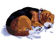 Beagle is sleeping
