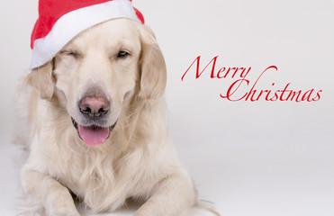 Retriever Christmas card