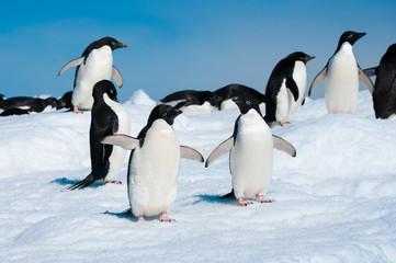 Penguins in the Antarctic sea