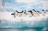 Fototapety Penguins on the snow