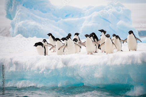 Foto op Canvas Poolcirkel Penguins on the snow