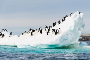Pingwiny na śniegu