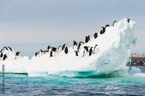 Foto op Plexiglas Antarctica Penguins on the snow