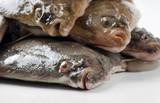Fresh flounders poster