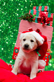 Christmas  - portrait of cute labrador puppy in Santa hat
