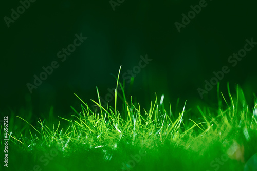 L'herbe dans la lumière