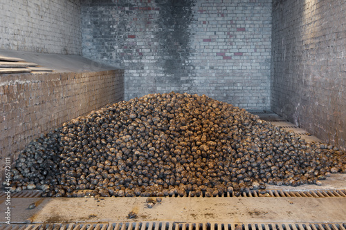 potatoes in storage house