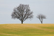canvas print picture - two trees field blue sky in spring
