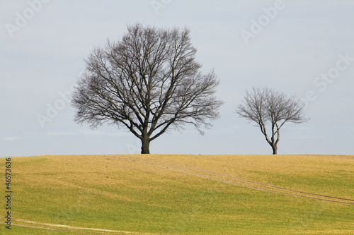 canvas print picture two trees field blue sky in spring