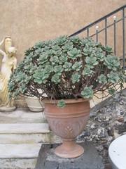 vaso di terracotta