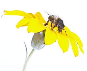 abeja trabajando