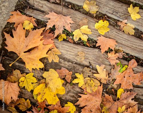 Autumn leaves on wood floor background