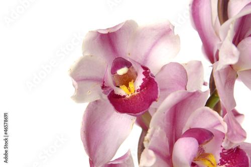 Fototapeten,jahrestag,schön,schönheit,blühen