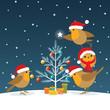 Funny Christmas Robins
