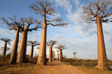 Allée des Baobabs, Morondava