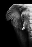 Fototapete Wildlife - Afrikakarte - Säugetiere