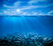 Leinwanddruck Bild - Underwater coral reef seabed view with horizon and water surface