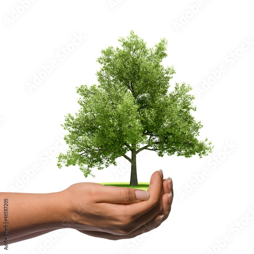 Hand holding a big tree