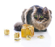 cat with gold gift boxes