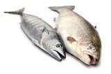 Fresh Bonito and Salmon poster