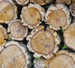 Holzstapel Korkeiche - stack of wood from cork oak 04