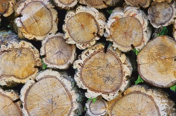Holzstapel Korkeiche - stack of wood from cork oak 03