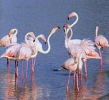 Fototapety Group of flamingos