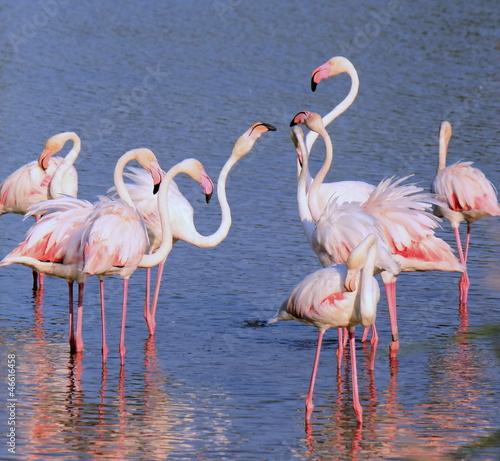 Grupa flamingów
