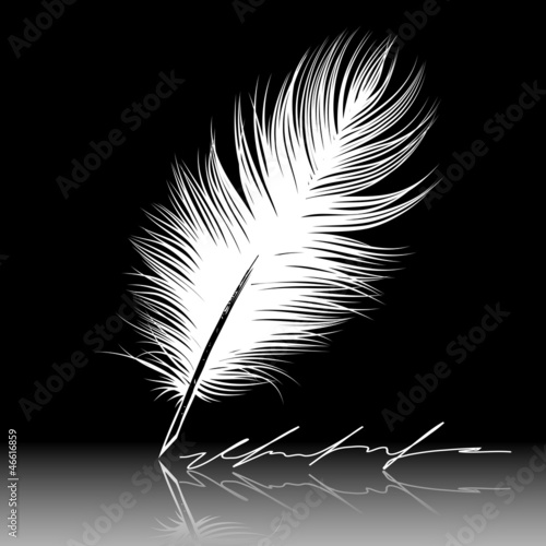 Vector illustration of white Feather, pen, calligraphy writing